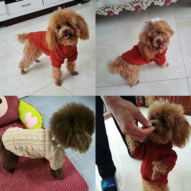 Pet Dog Cat Turtleneck Sweater Winter Warm Knitted Dog Clothes for Small Dogs Chihuahua Clothing Puppy Coat Jacket Pets Products Cat's Accessories Dog's Accessories