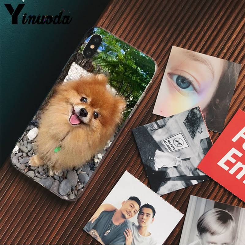 Pomeranian dogs dog Customer High Quality Phone Case for iPhone X XS MAX 6 6s 7 7plus 8 8Plus 5 5S SE XR iPhone Case