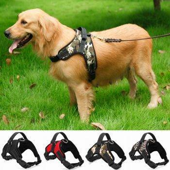 Dog's Casual Nylon Harness Dog's Accessories