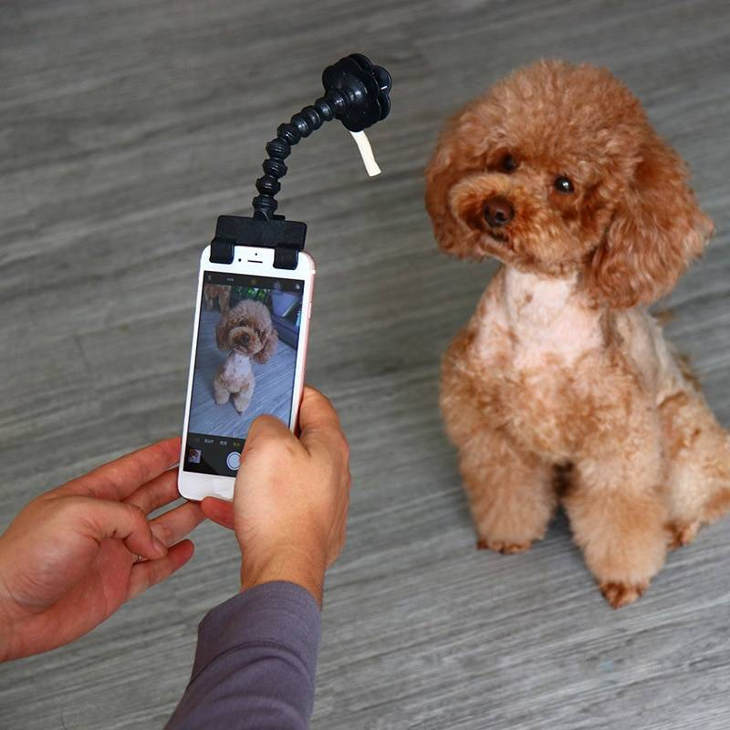 Pet Selfie Stick for Dogs Cat photography tools Pet Interaction Toys Concentrate Training Supplies Dog Accessories Drop Shipping Dog's Accessories